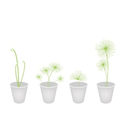 Cyperus Papyrus Plants in A Flower Pot vector image