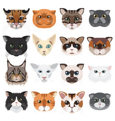 cats heads icons emoticons set vector image vector image