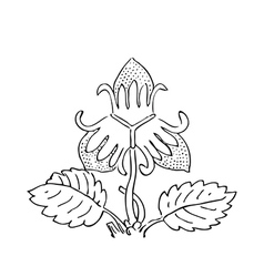 Hand drawn of strawberry bushes Branch with buds vector image vector image