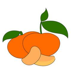 fresh orange mandarin on white background vector image