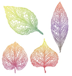 vein leaves vector image vector image