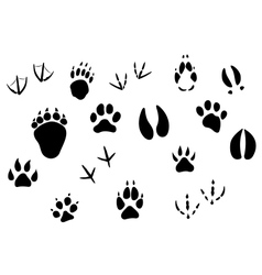 Animal footprints and tracks vector image vector image