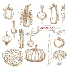 Farm egetables sketches from autumn harvest vector