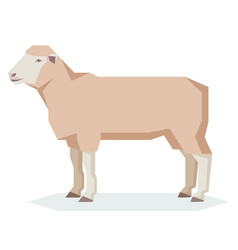 Flat geometric dorset sheep vector