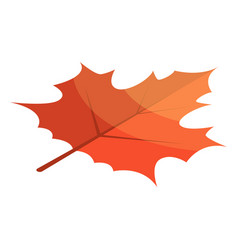 red maple leaf icon isometric style vector image