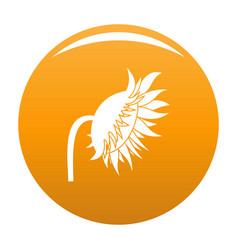 Sunflower icon orange vector