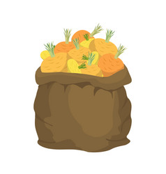 turnip burlap bag sack of vegetables big crop on vector image