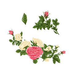 set of pink and white roses bouquets flowers and vector image