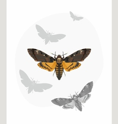 Butterfly Deaths head Hawk moth vector