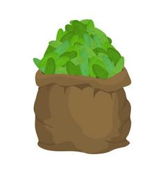 Cucumber burlap bag sack of vegetables big crop vector