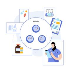 Mitosis process concept vector