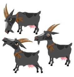 Gray spotted goat in three poses animal vector image