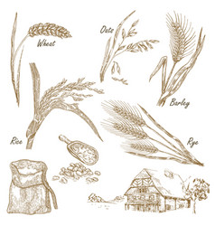 wheat rye oats barley farm house in vintage vector image