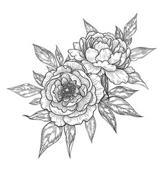 Hand drawn floral bunch with peony flowers vector