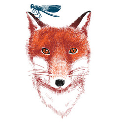 Hand drawn fox and dragonfly vector