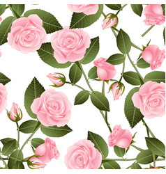 Pink rose on white background vector