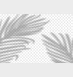 Realistic tropical shadow vector