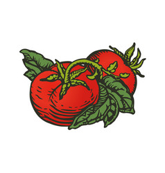 Tomatoes woodcut vector