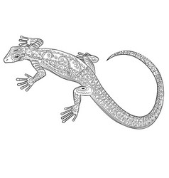 coloring page with lizard in zentangle style vector image