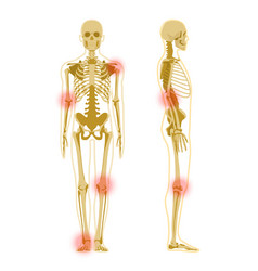 human skeleton in front and profile isolated vector image