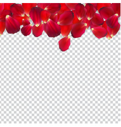 naturalistic rose petals on transparent background vector image
