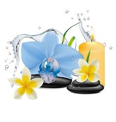 Orchid flower water splash and zen stone vector image