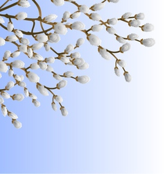 Pussy willow branch spring background illu vector