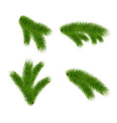 set fir branches on white background vector image