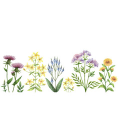 watercolor banner with medical plants vector image vector image