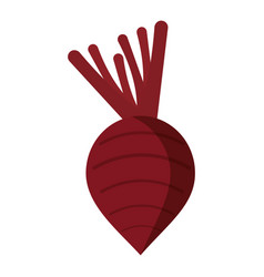 Beet vegetable nutrition icon vector