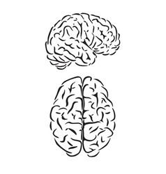 Brain outline symbols vector