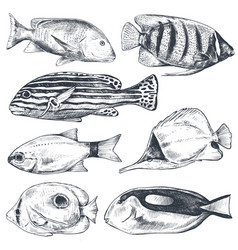 collection hand drawn exotic fishes in vector image