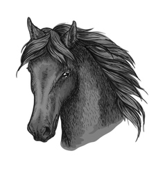 Horse head portrait with calm look vector image