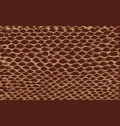 Snake skin brown vector