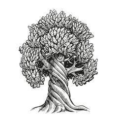tree oak hand drawn vintage sketch vector image