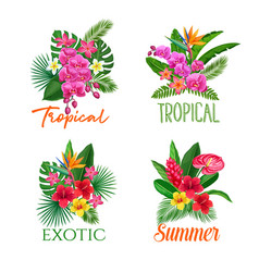 tropical banners flower vector image