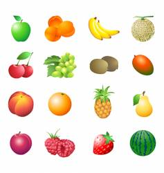 calorie table fruits vector image