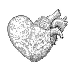 heart symbol with half real human heart together vector image