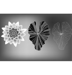 Lotus flower and leaves elements black and white vector