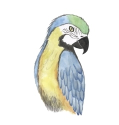 parrot watercolor bird vector image
