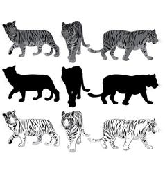 Walking Tigers vector