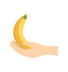 hand holding banana fruit vector image