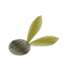 drawing olive with leaves tree vector image vector image