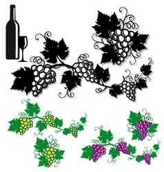 Grapes with vine leaves vector