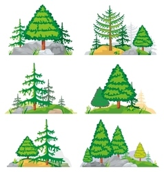 Landscapes with coniferous trees grass and stones vector image vector image