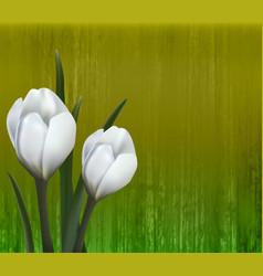 floral background spring flowers crocus vector image vector image