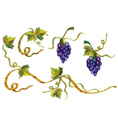 grape vine design vector image vector image