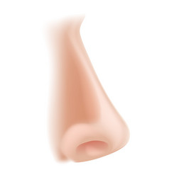Nose body part vector
