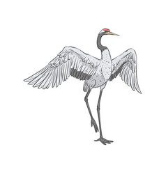 red-crowned crane stands on one leg with spread vector image