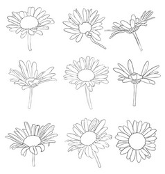 set of drawing daisy flowers vector image